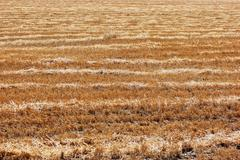 Sloping wheat field Stock Photos
