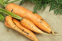 carrots with tops on sacking - stock photo