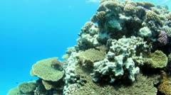 Underwater scene - stock footage