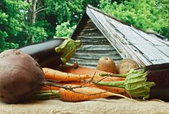 vegetables on the background of rural areas - stock photo