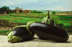 eggplant on the background of rural areas - stock photo