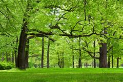 Stock Photo of summer forest