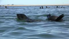 Swimming seals 5 Stock Footage