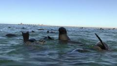 Swimming seals 7 Stock Footage