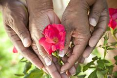 senior african american couple hands holding rose flower - stock photo