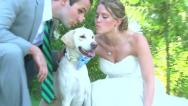Stock Video Footage of Bride Groom and Dog Portraits