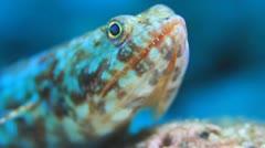 Lizardfish macro eye head close up Stock Footage