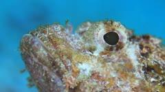 Eye of scorpionfish macro head Stock Footage