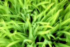 Stock Photo of close up of grass