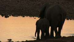 Elephants drinking after sunset Stock Footage