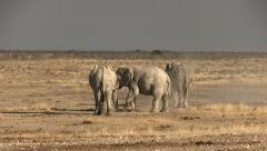 Elephants having a dust bath Stock Footage