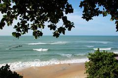 Pipa beach with trees Stock Photos