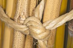 bunch of bamboo - stock photo