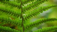 Stock Video Footage of 0126-dogstream-ferns3