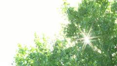 Sunshine Through Trees Stock Footage