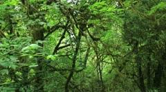 Redwood Forest 30 Big Tree Wayside Stock Footage
