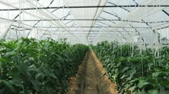 Inside the greenhouse with seedlings - stock footage