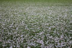 Pink petals laying on green grass - stock photo