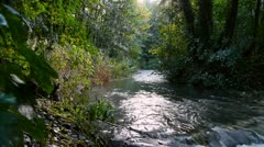 0128-dogstream-river - stock footage