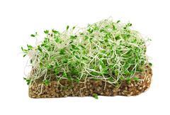 Alfalfa sprouts Stock Photos