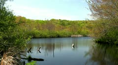 Smiling Pond Thornton Burgess Green Briar Sandwich Cape Cod Stock Footage