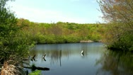 Stock Video Footage of Smiling Pond Thornton Burgess Green Briar Sandwich Cape Cod