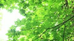 Redwood Forest 34 Big Tree Wayside Stock Footage