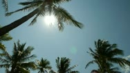 Stock Video Footage of Palm Tree and sun in Miami Florida 30p