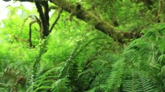 Redwood Forest 36 Big Tree Wayside Stock Footage