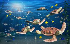 Merikilpikonna Piirros