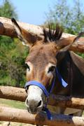 funny donkey - stock photo