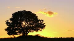 Sunset and lonely tree. Time lapse Stock Footage