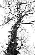 Stock Photo of branchy tree