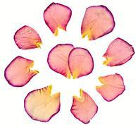Dried rose petals Stock Photos