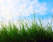 closeup growing grass - stock photo