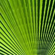 Closeup palm leaf Stock Photos