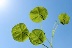green leafs  in sky - stock photo