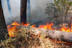 Stock Photo of forest fire