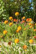 Stock Photo of beautiful flowers