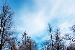 cloudscape in forest - stock photo