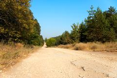long and wide forest road - stock photo