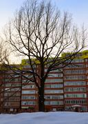 Tree and building Stock Photos
