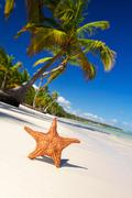 Starfish on caribbean beach Stock Photos