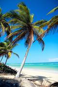 Palm on tropical beach Stock Photos
