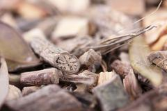 Root for mamajuana, caribbean aphrodisiac Stock Photos
