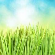 Green grass with sunny bokeh - stock photo
