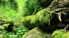 Redwood Forest 48 Fern Canyon Stock Footage