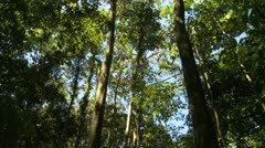 Canopy of trees Stock Footage