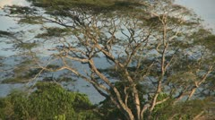 Tropical birds in a tree Stock Footage