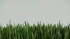 Woman looking at wheatgrass Stock Footage